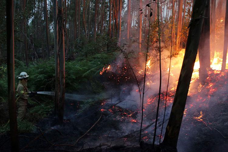 62 personas mueren debido a los Incendios Forestales en Portugal