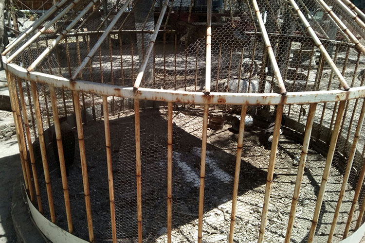 La Profepa aseguró siete aves silvestres por maltrato animal