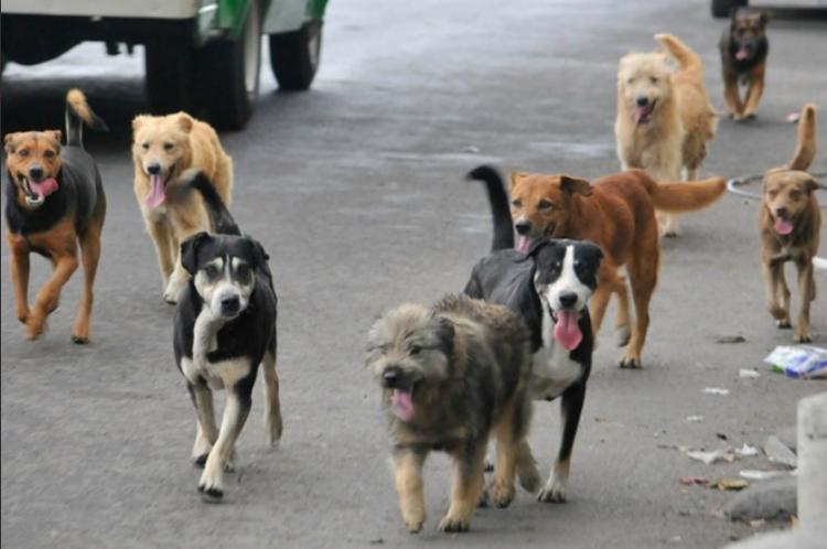Exterminan a miles de perros callejeros por el Mundial