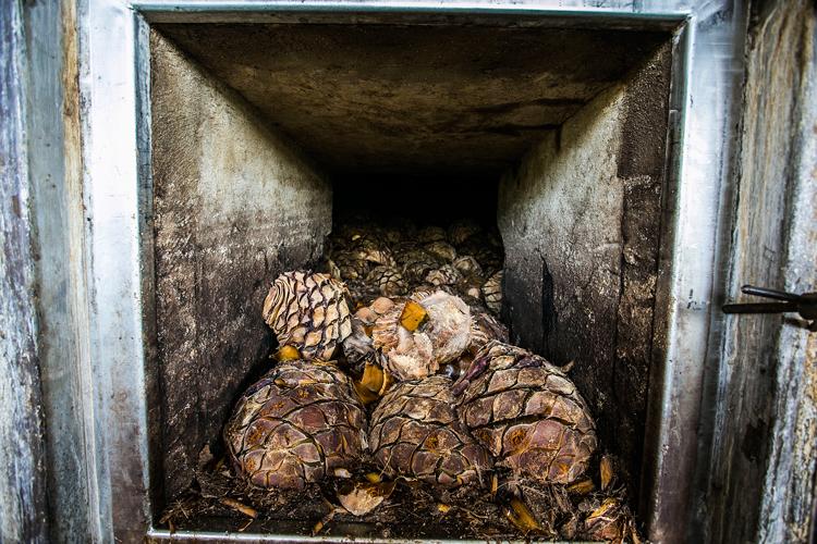 Rompe récord precio de agave